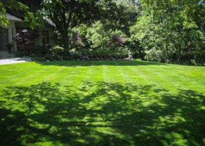 landscape-Oakville backyard maintenance trees and grass
